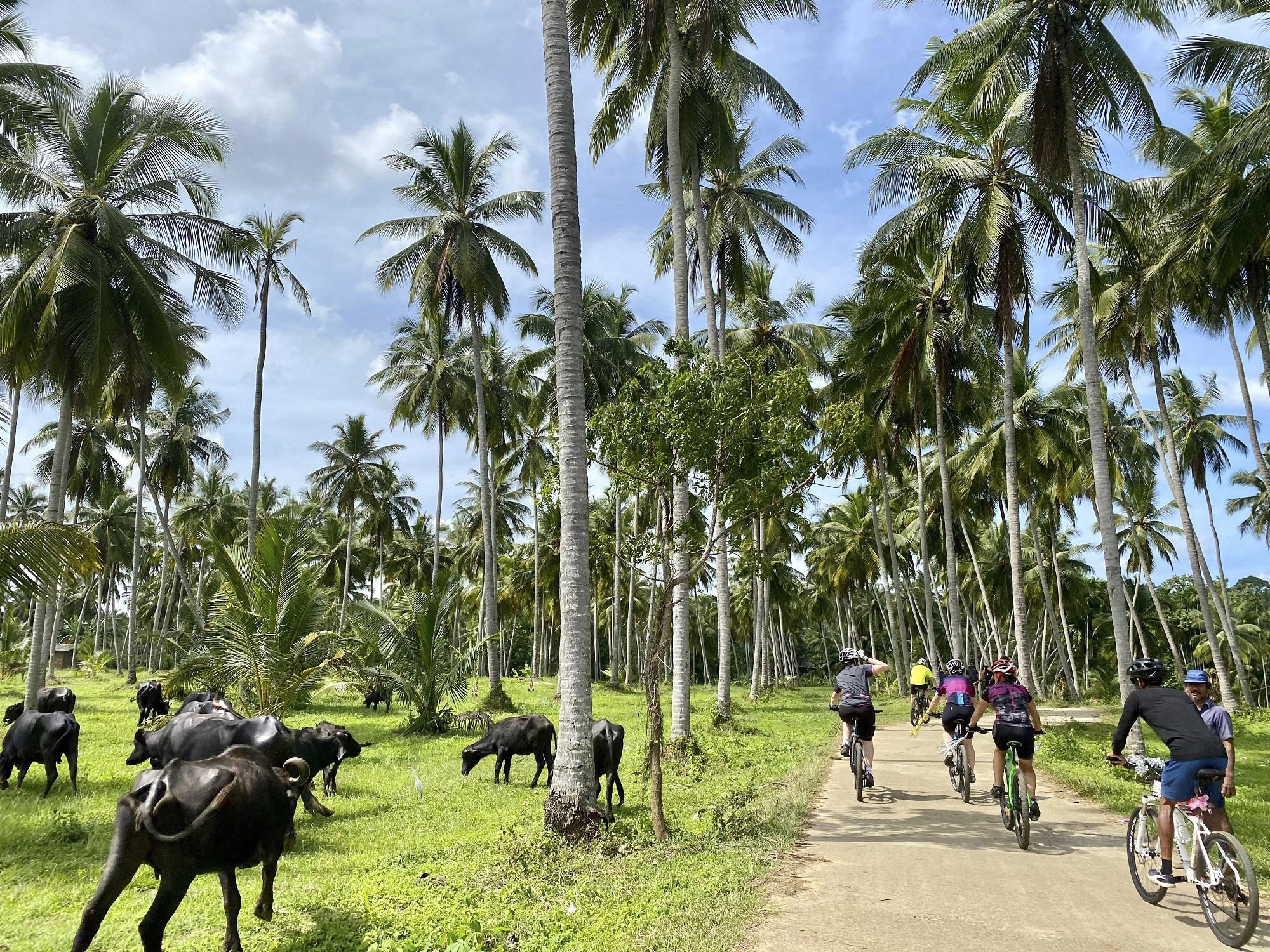 Photos from our Sri Lanka - Classic Cycling Holiday