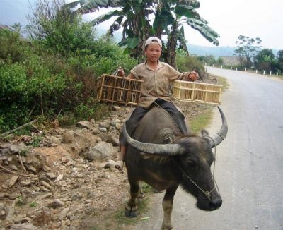 Child on a water Buffalo