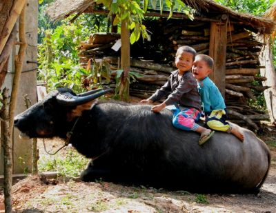Kids ride a water buffalo