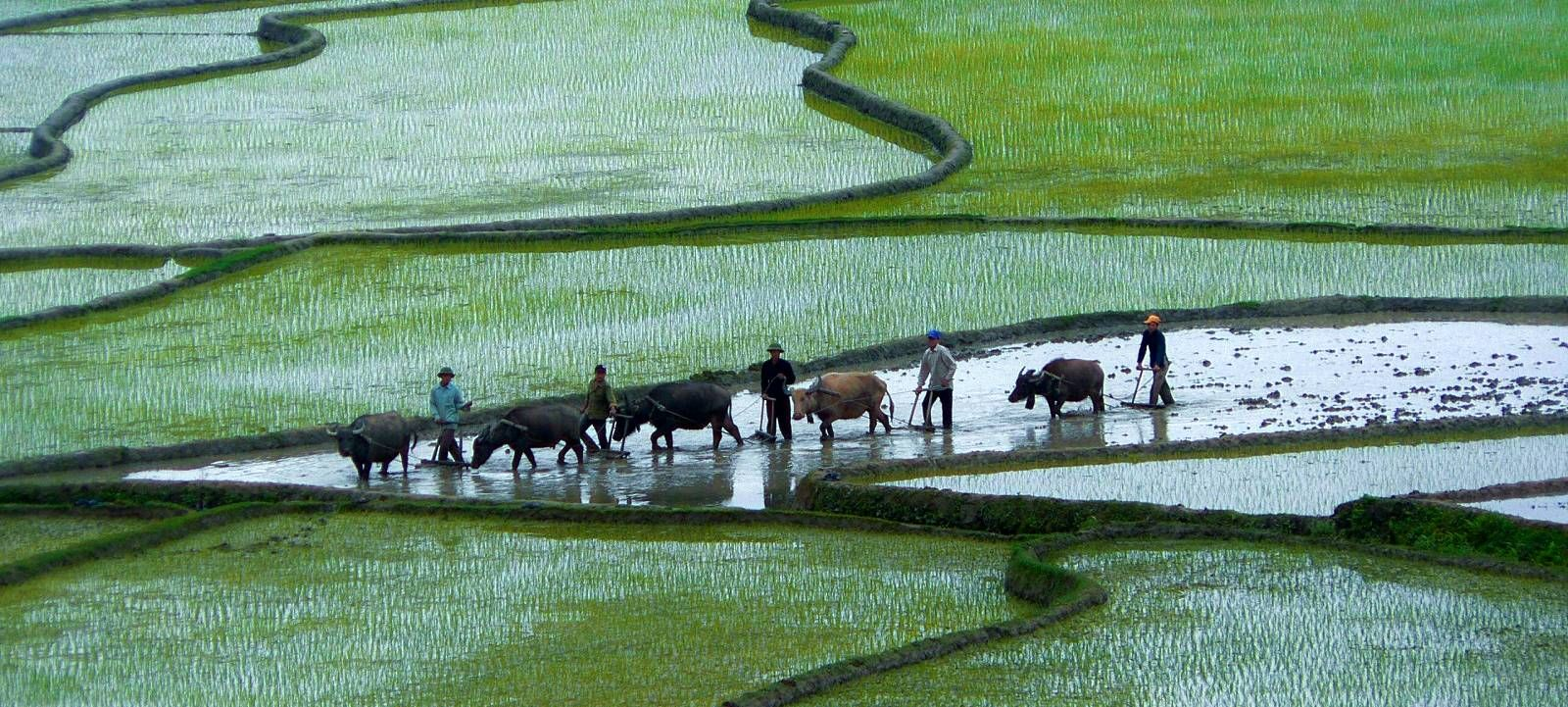 Local farmers in Vietnam