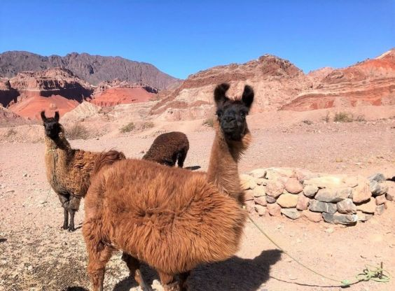 Explore redspokes' North Argentina Bicycle Tour